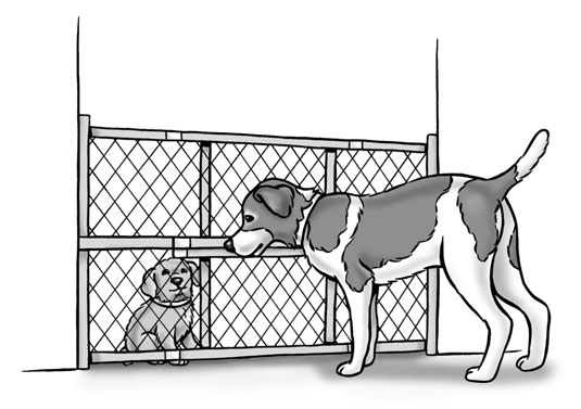 A baby gate can help your new dog and your resident dog get acquainted.