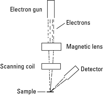 Diagram of a scanning electron microscope.
