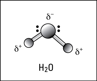 Polar covalent bonding in water.