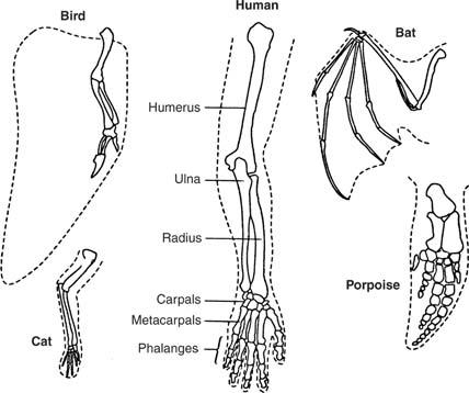 13 Evolution Melmore Biology