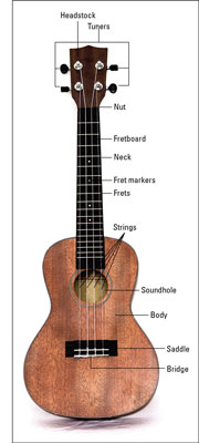 A typical ukulele.
