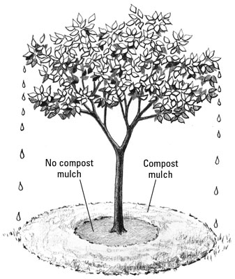 Keep compost mulch 4 to 6 inches away from stems and trunks.