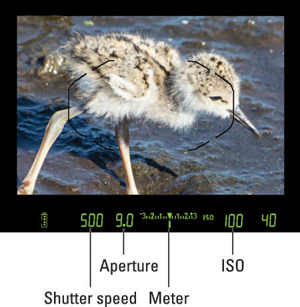 Figure 1: The shutter speed, f-stop, and ISO speed appear in the viewfinder.