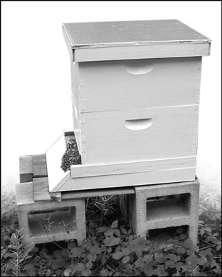 You can also elevate your hive on cinderblocks.