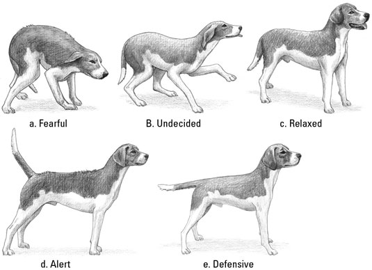 Understand what your puppy is telling you in these five postures. [Credit: Illustration by Barbara
