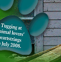 Tugging at animal lovers' heartstrings in July 2008