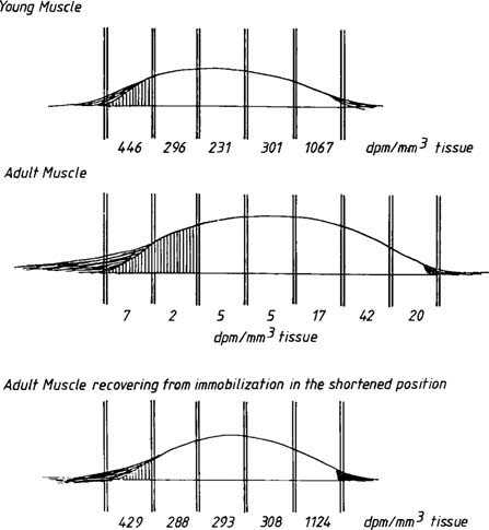 Level of labeling in end and middle regions of young (top) and mature ...
