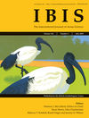 Ibis (IBI) cover image