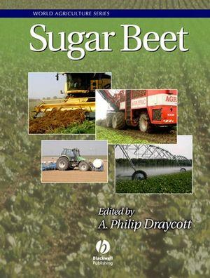Sugar Beet