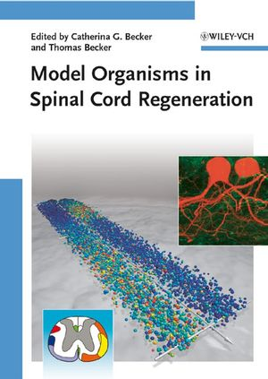 Model Organisms in Spinal Cord Regeneration
