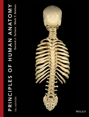 Principles of human anatomy 13th edition anatomy physiology principles of human anatomy 13th edition fandeluxe Gallery