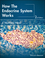 How the Endocrine System Works, 2nd Edition (EHEP003506) cover image