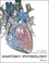 Anatomy and Physiology, 1st Edition (EHEP003607) cover image