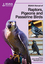 BSAVA Manual of Raptors, Pigeons and Passerine Birds (1905319045) cover image